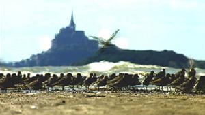 Saisons de la Baie